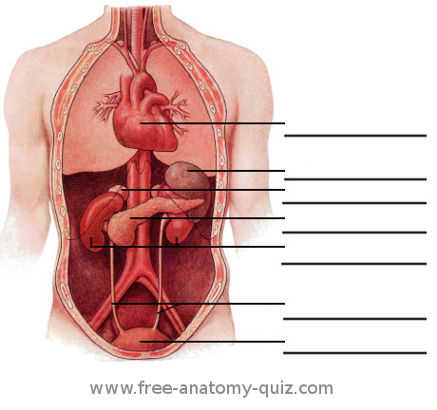 Free Anatomy Quiz - The Internal Organs (deep) Image