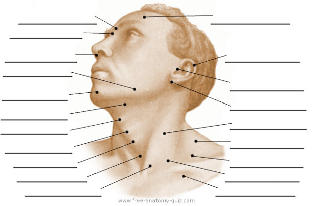 Free Anatomy Quiz - The Surface Anatomy of the Head and Neck Image