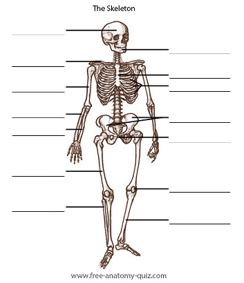 SkeletonIDQ1 in addition Blog Blog Blog additionally Cavity further 9484822 moreover 6064619. on body cavities labeling