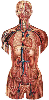 general anatomy image