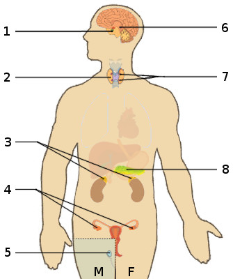 Free Anatomy Quiz The Endocrine System Anatomy Quiz 1
