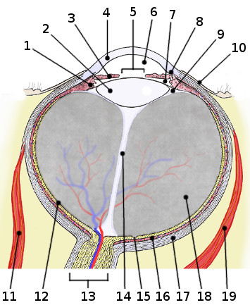 Free Anatomy Quiz - Anatomy of the Eye, Quiz 3
