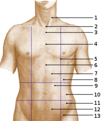 Free Anatomy Quiz Surface Anatomy The Abdominal Area Quiz 3