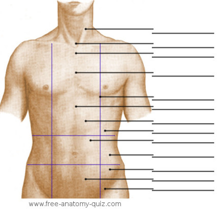 The Surface Anatomy of the Abdominal Area Image
